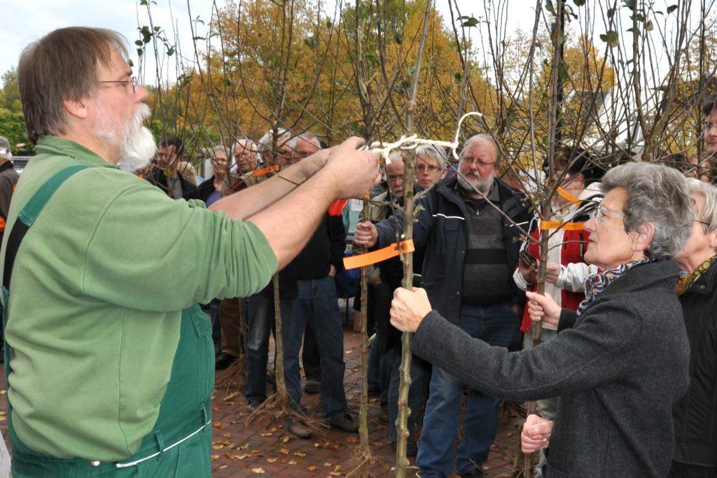 Pomologe Rainer Bethlehem beim Erstbeschnitt der Obstbäume